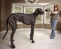 The longest Dog in The World_1